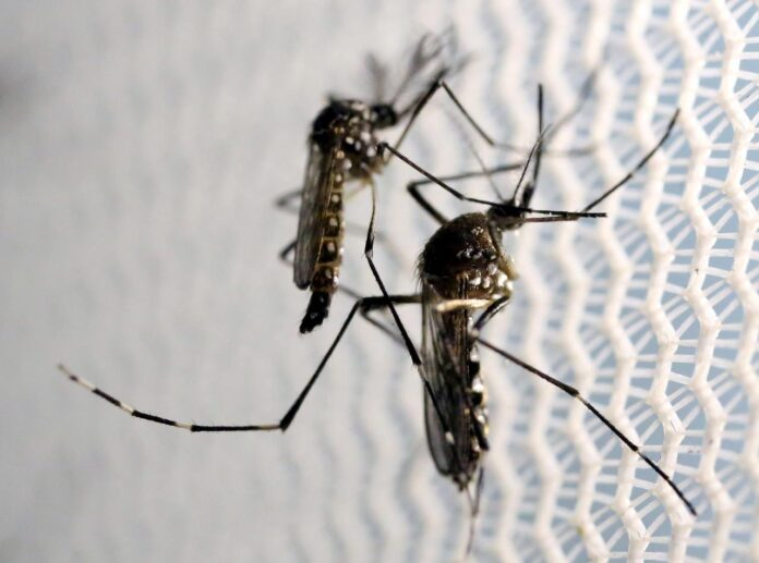Islamabad records 141 new cases of dengue The situation of the dengue outbreak is worsening in Islamabad as 141 new cases were reported from the federal capital overnight, Geo News reported Monday. Meanwhile, Khyber Pakhtunkhwa reported 107 new cases of the mosquito-borne disease during the last 24 hours. Punjab reports 459 new dengue cases With dengue continuing to wreak havoc in the country, 459 cases were reported in Punjab overnight, out of which 335 were from Lahore, Primary and Secondary Healthcare Department Secretary Imran Sikandar Baloch said Sunday. Meanwhile, another patient suffering from dengue succumbed to the disease in Rawalpindi on Sunday, taking the dengue death toll to 19 so far. In a press statement, Baloch said 64 cases were reported from Rawalpindi, eight from Attock, six from Khanewal, and five from Gujrat. Similarly, four dengue patients were reported in Faisalabad, Muzaffargarh, Okara, and Sahiwal each, three cases from Hafizabad and Sheikhupura and two from Chakwal. So far this year, 6,727 confirmed cases of dengue have been reported across the province, while 4,874 confirmed cases of dengue were reported in Lahore.